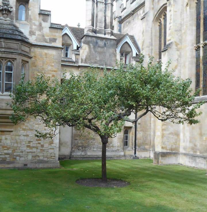 Sapling_of_newton_apple_tree
