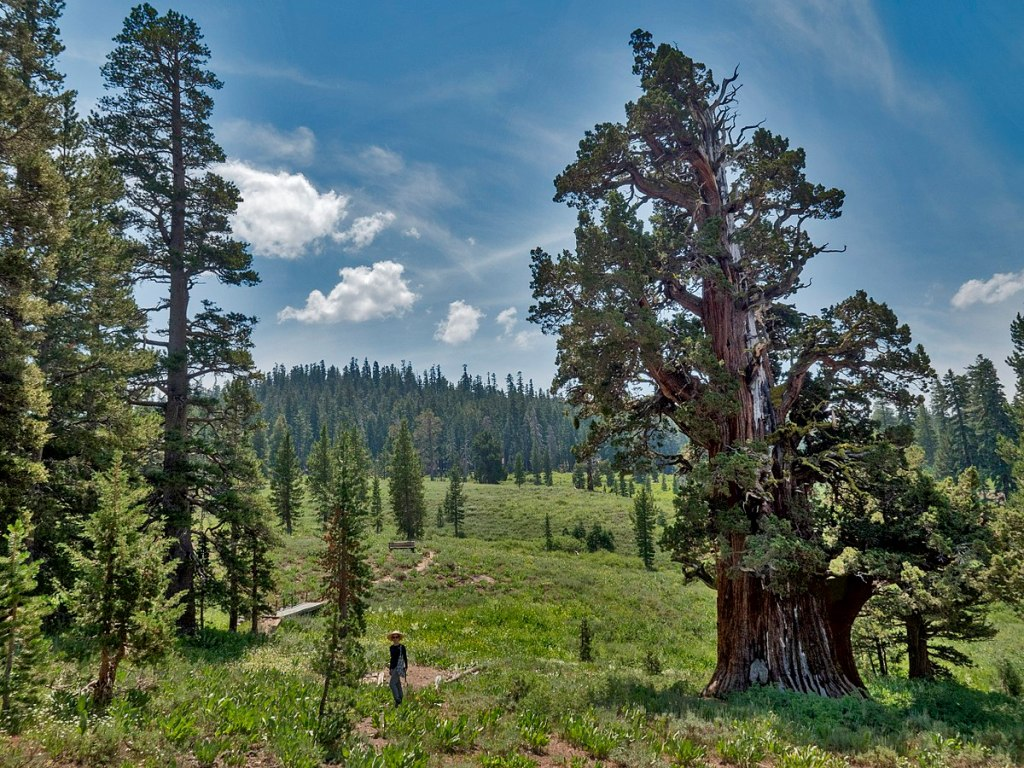 1200px-Bennett_Juniper_north_side