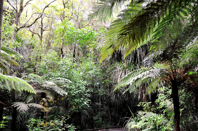1200px-The_jungle_inside_Waipoua_Forest