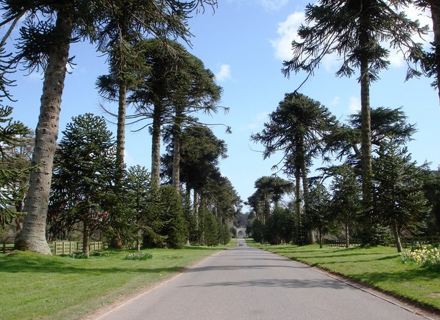 Tree_lined_Drive_at_Bicton_College_-_geograph.org.uk_-_364399