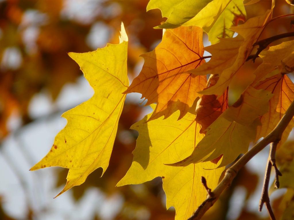 leaves-10704_1920