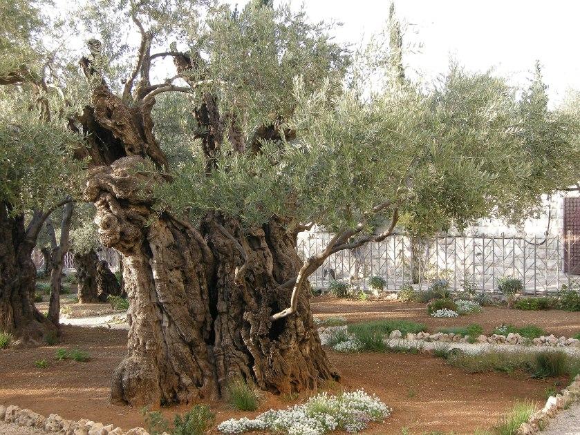 Church_of_All_Nations_(Jerusalem)DSCN4744