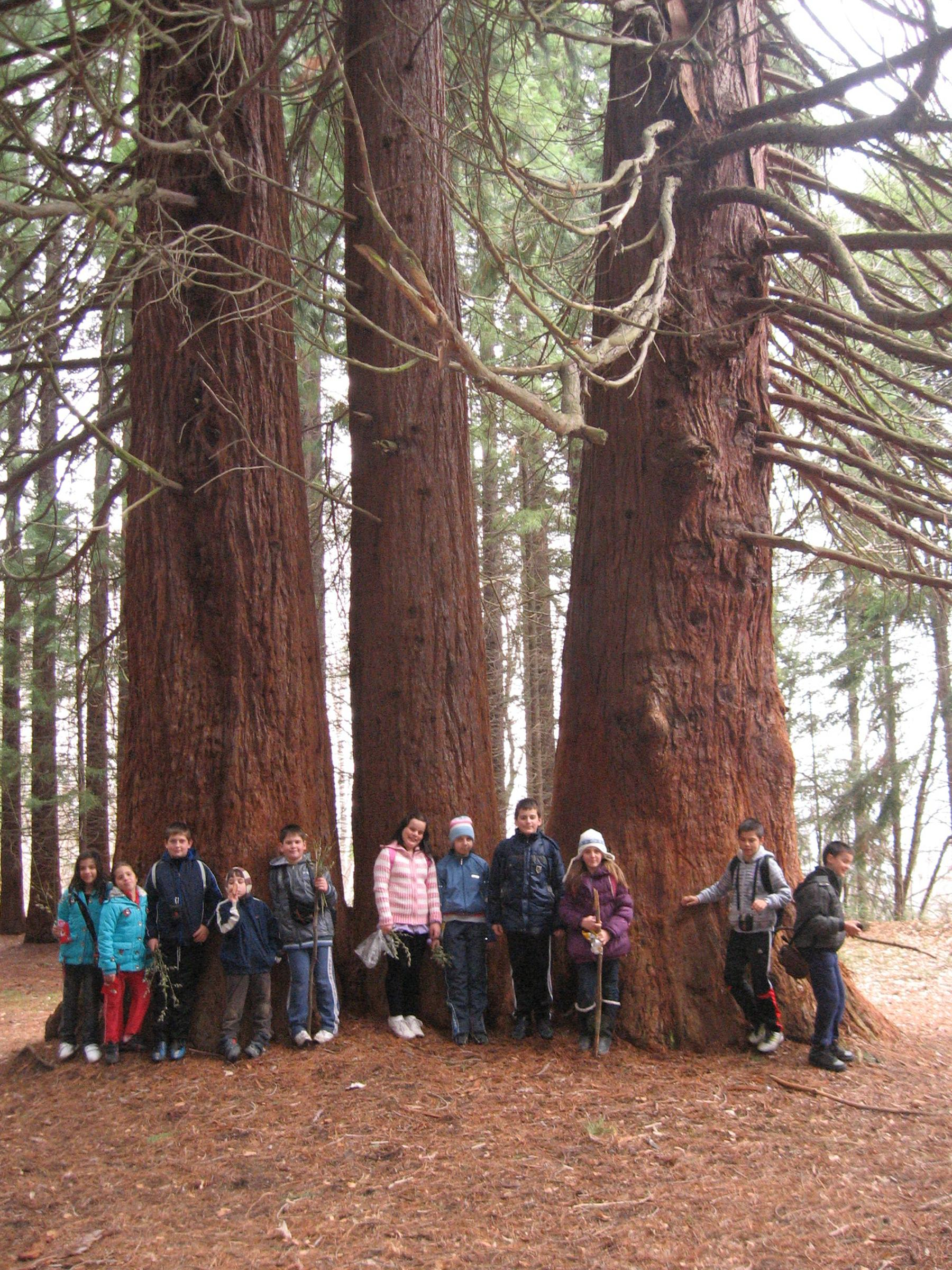 Sequoia Natural History Association