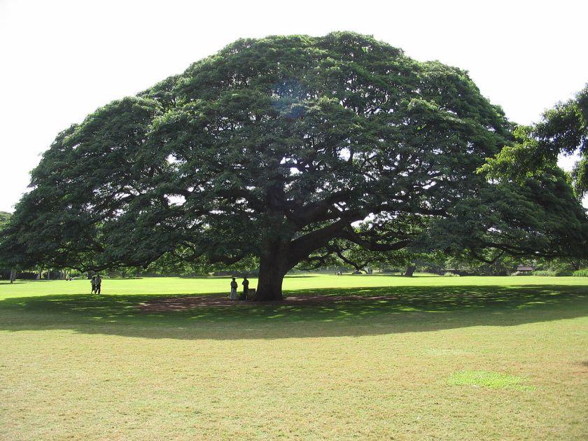 1280px-hitachi_tree