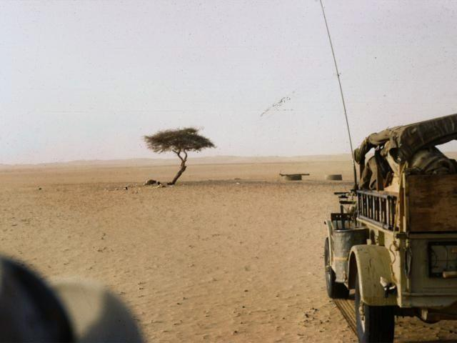 The Unfortunate End of the World's Loneliest Tree – The Tree of Ténéré