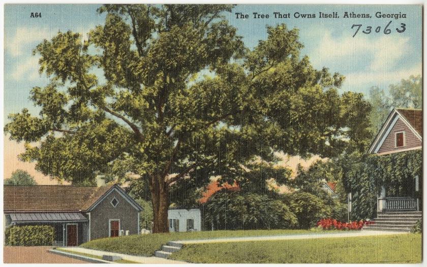 the_tree_that_owns_itself2c_athens2c_georgia_28834283897329