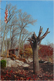 911 survivor tree november 2001
