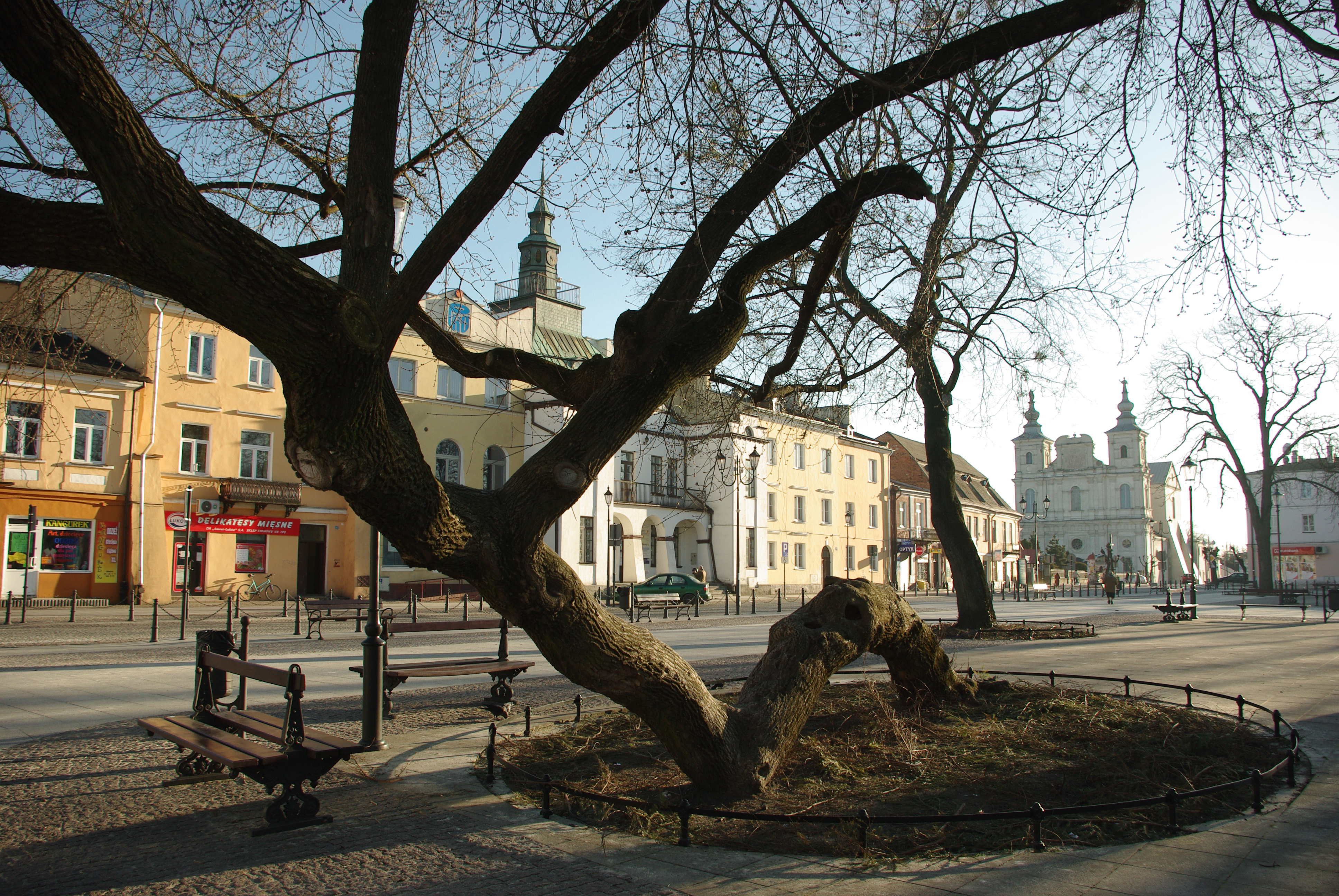 kneeling tree poland European tree of the year 2019